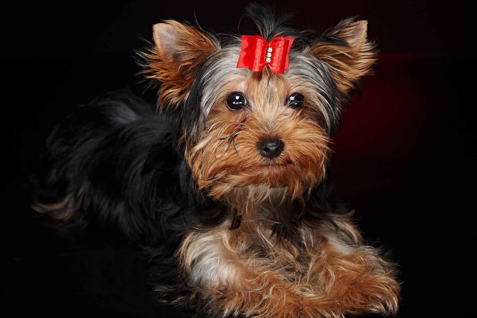 dog groomers glasgow southside dogs about glasgow 20. Black Bedroom Furniture Sets. Home Design Ideas